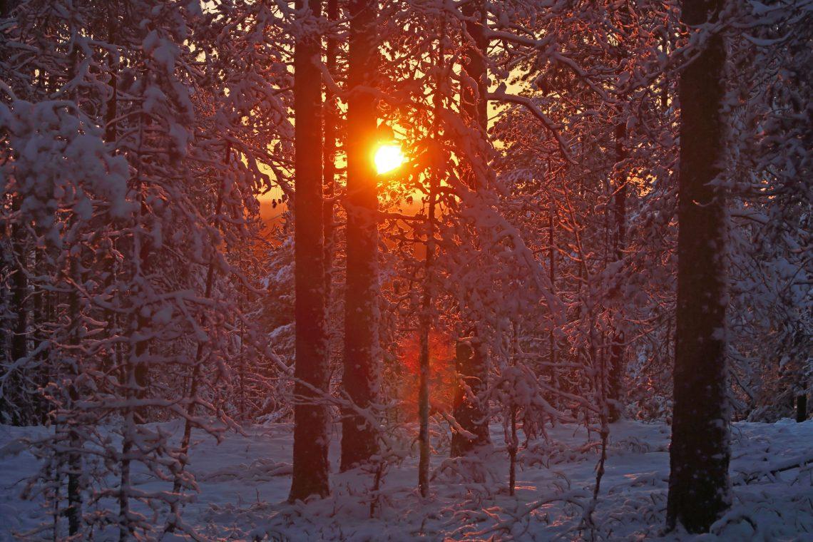 Talvinen aurinko pilkistää puiden välistä Niiniharjulla.